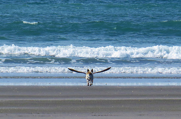 pefectly-timed-dog-photos-2