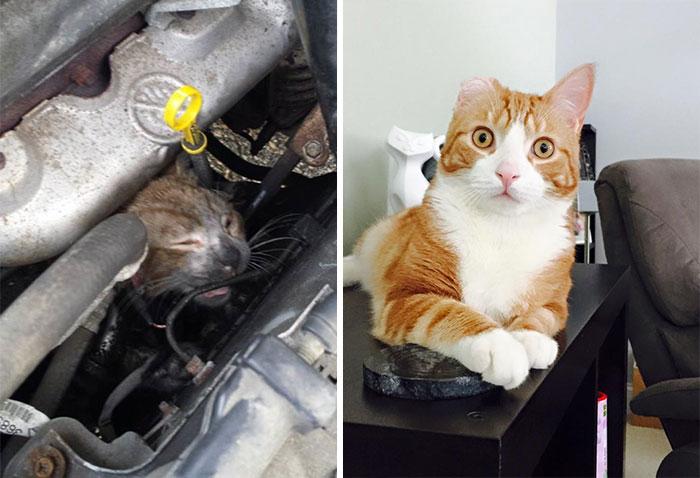 Трогателни снимки преди и сега на спасени котета