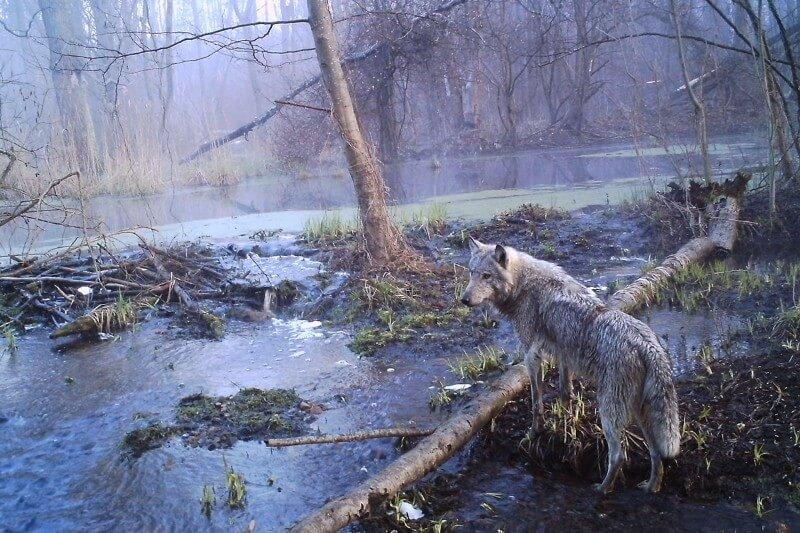 живот в Чернобил