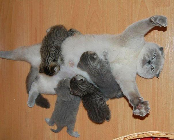 родителство, www.interesnotii.com
